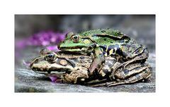 Froggi-Burger