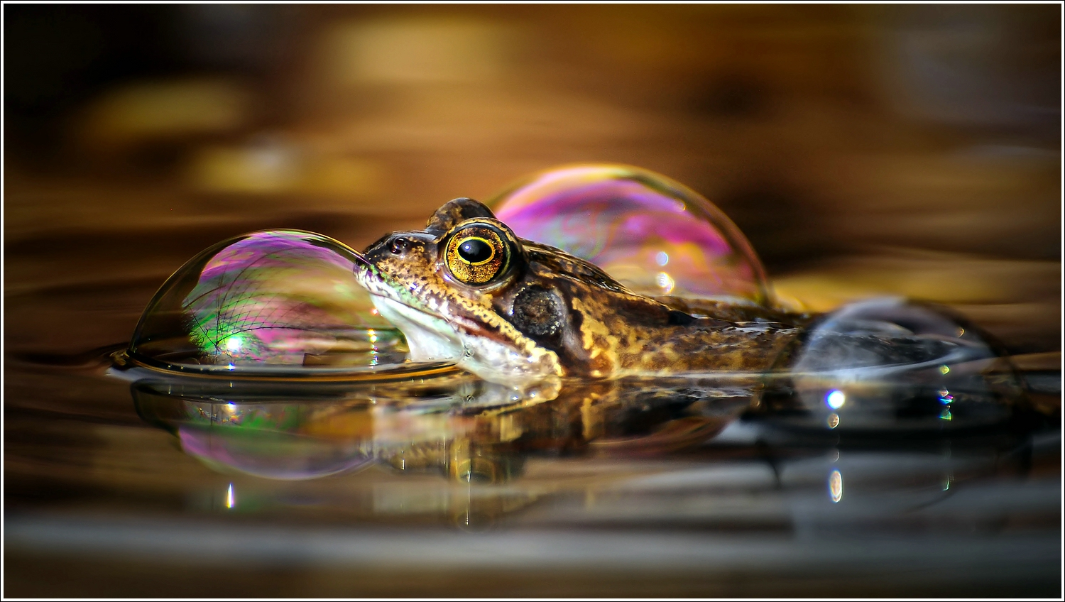 Froggy and the bubbles