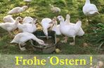 Frohe Ostern 2006 :-))