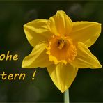 *** Frohe Ostern ***