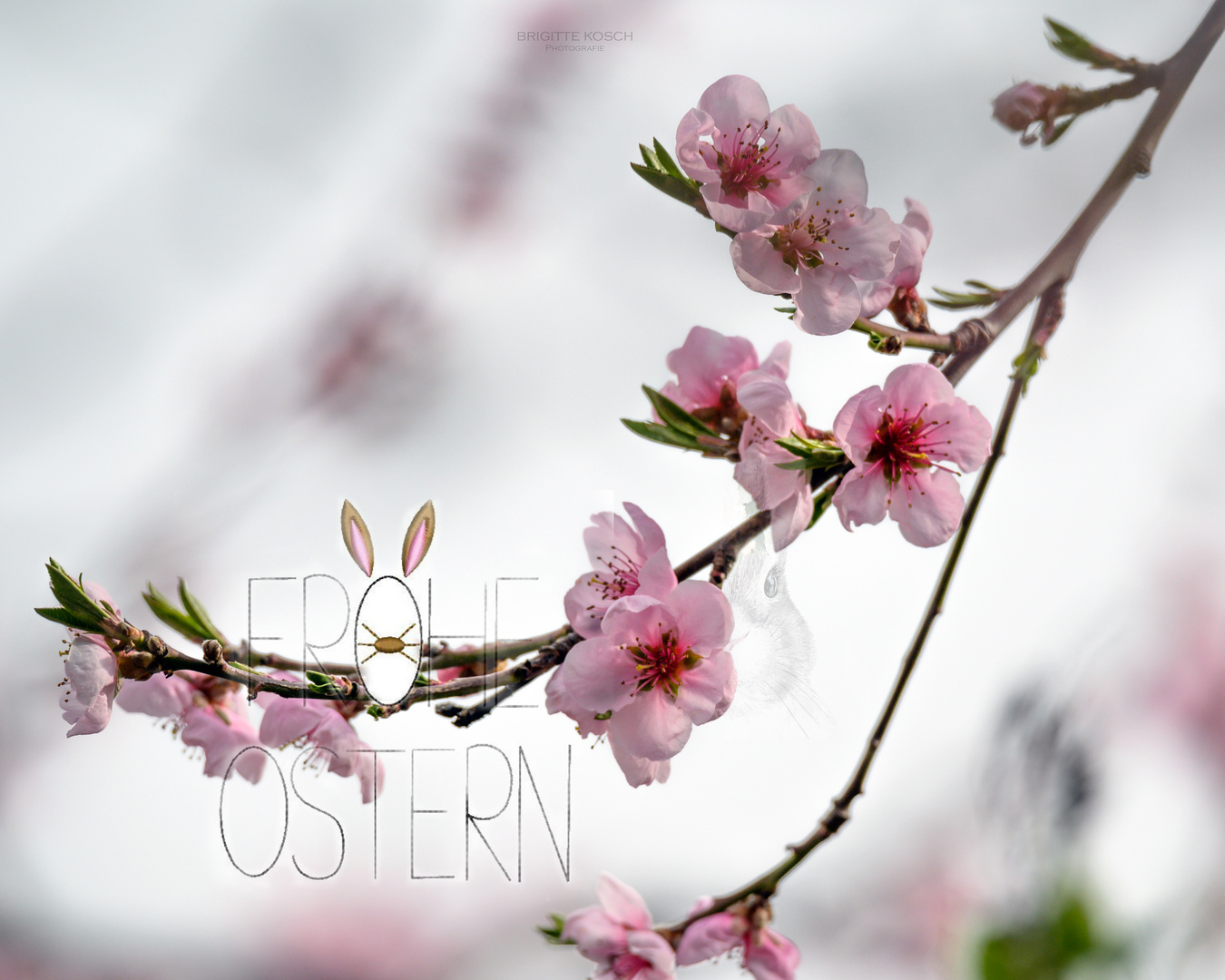 || Frohe Ostern ||