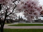 Frohe Ostern aus Dresden