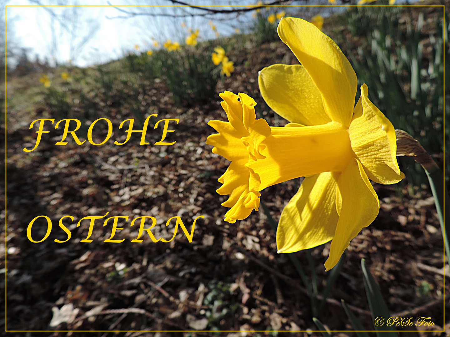 >>>Frohe Ostern