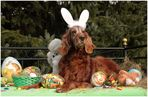 *Frohe Ostern*