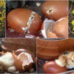 Frohe Ostern für ALLE