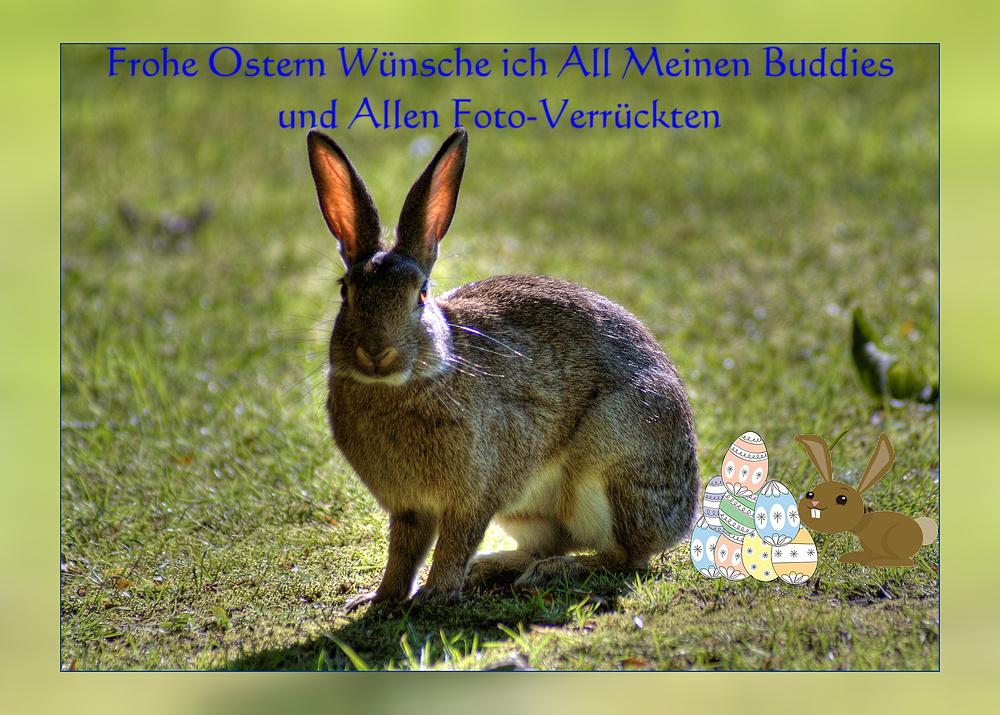Frohe Ostern Wünsche ich ALLEN Foto- Enthusiasten :>)