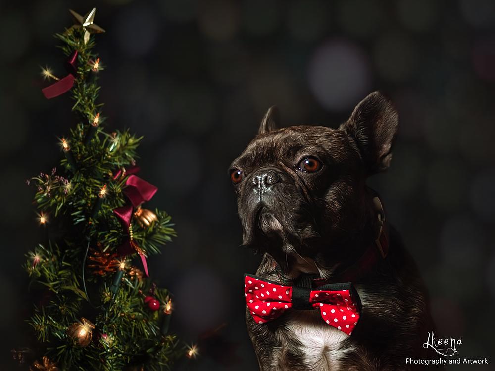 Frohe Weihnachen - Merry Christmas