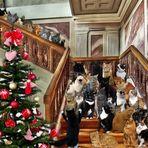 Frohe Weihnachten......