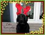 ~ *** Frohe Weihnachten **** ~