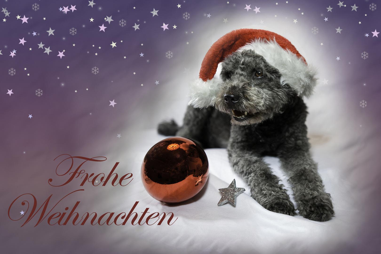 Bilder Weihnachten Tiere.Frohe Weihnachten Foto Bild Tiere Haustiere Hunde Bilder Auf