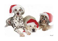 Frohe Weihnachten an alle FCler