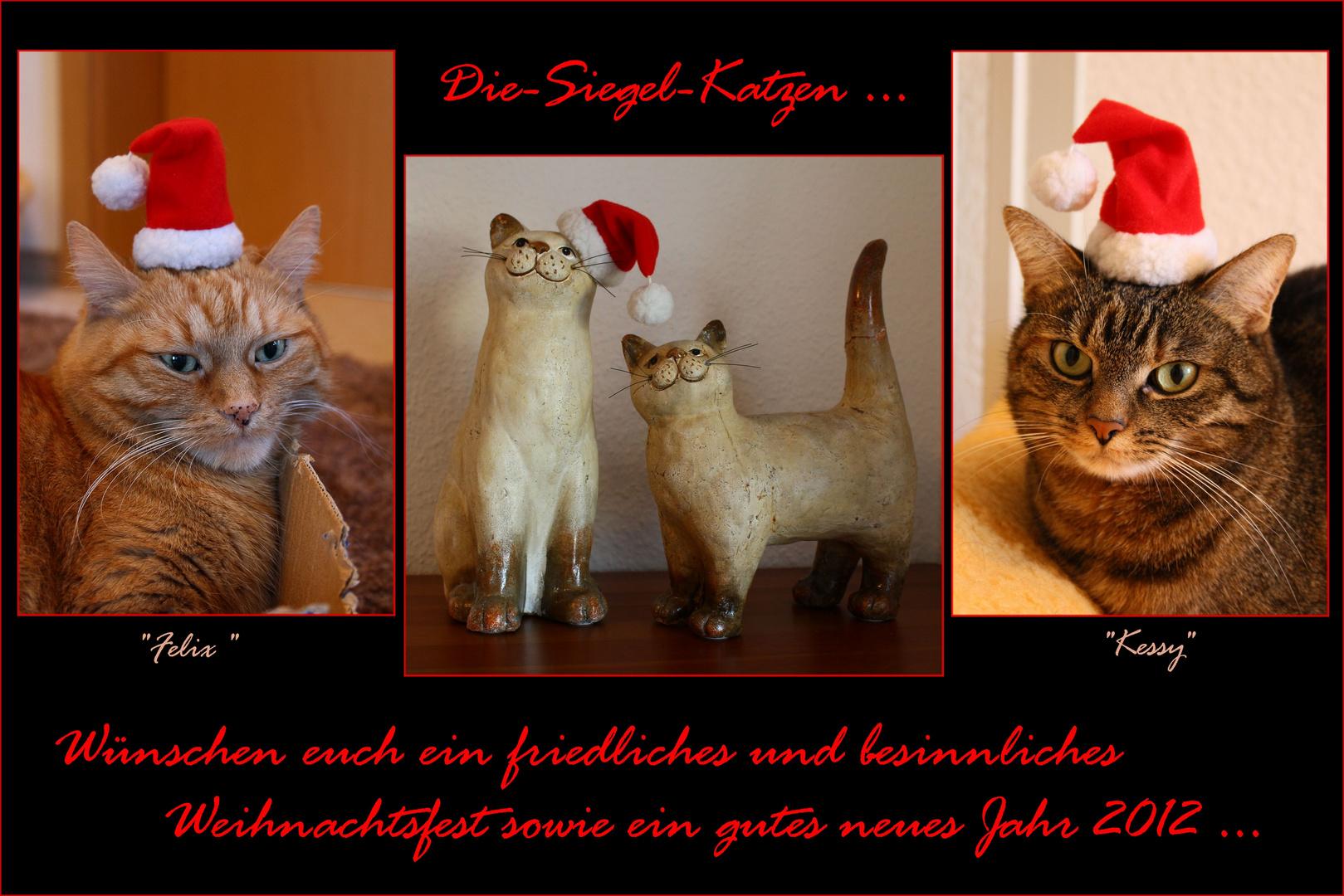 Frohe Weihnachten Katze.Frohe Weihnachten Foto Bild Tiere Haustiere Katzen Bilder