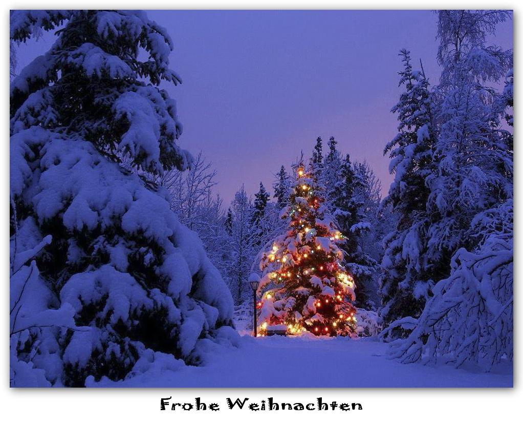 Grüße Frohe Weihnachten.Frohe Weihnachten Foto Bild Gratulation Und Feiertage