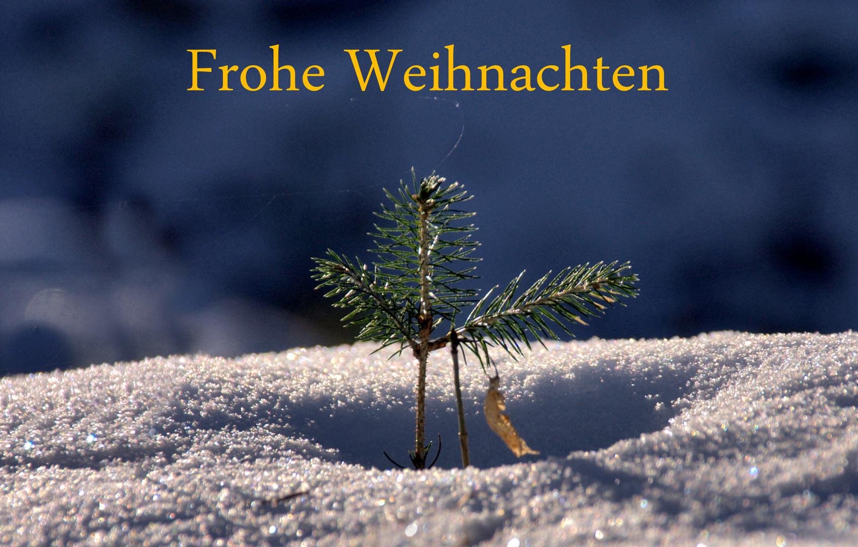 Frohe Weihnachtsgrüße.Frohe Weihnachten Foto Bild Gratulation Und Feiertage