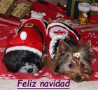 Frohe Weihnachten! - Feliz navidad!