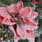 FROHE WEIHNACHTEN - MERRY CHRISTMAS - JOYEUX NOEL