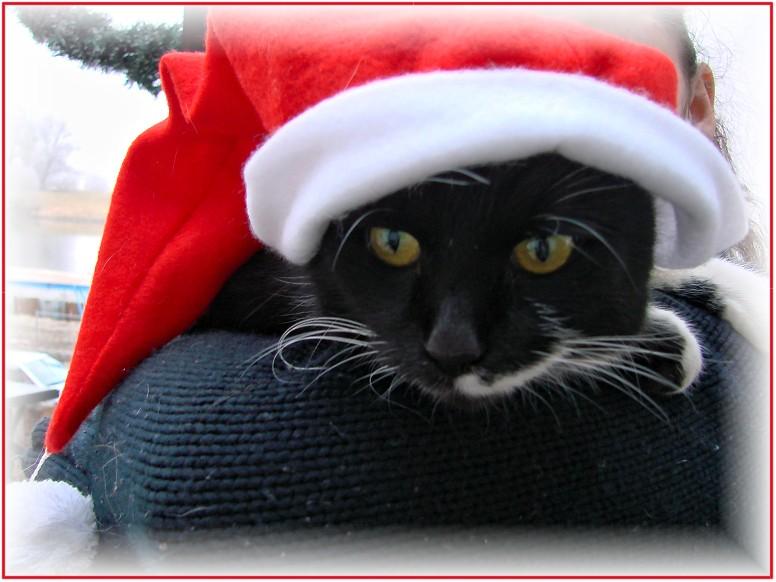 Frohe Weihnachten Katze.Frohe Weihnachten O Foto Bild Tiere Haustiere Katzen