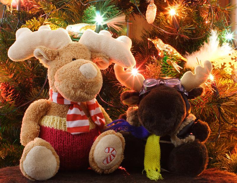 Frohe Weihnachten Und Ein Gesundes Neues Jahr.Frohe Weihnachten Und Ein Gesundes Neues Jahr Foto Bild Quatsch