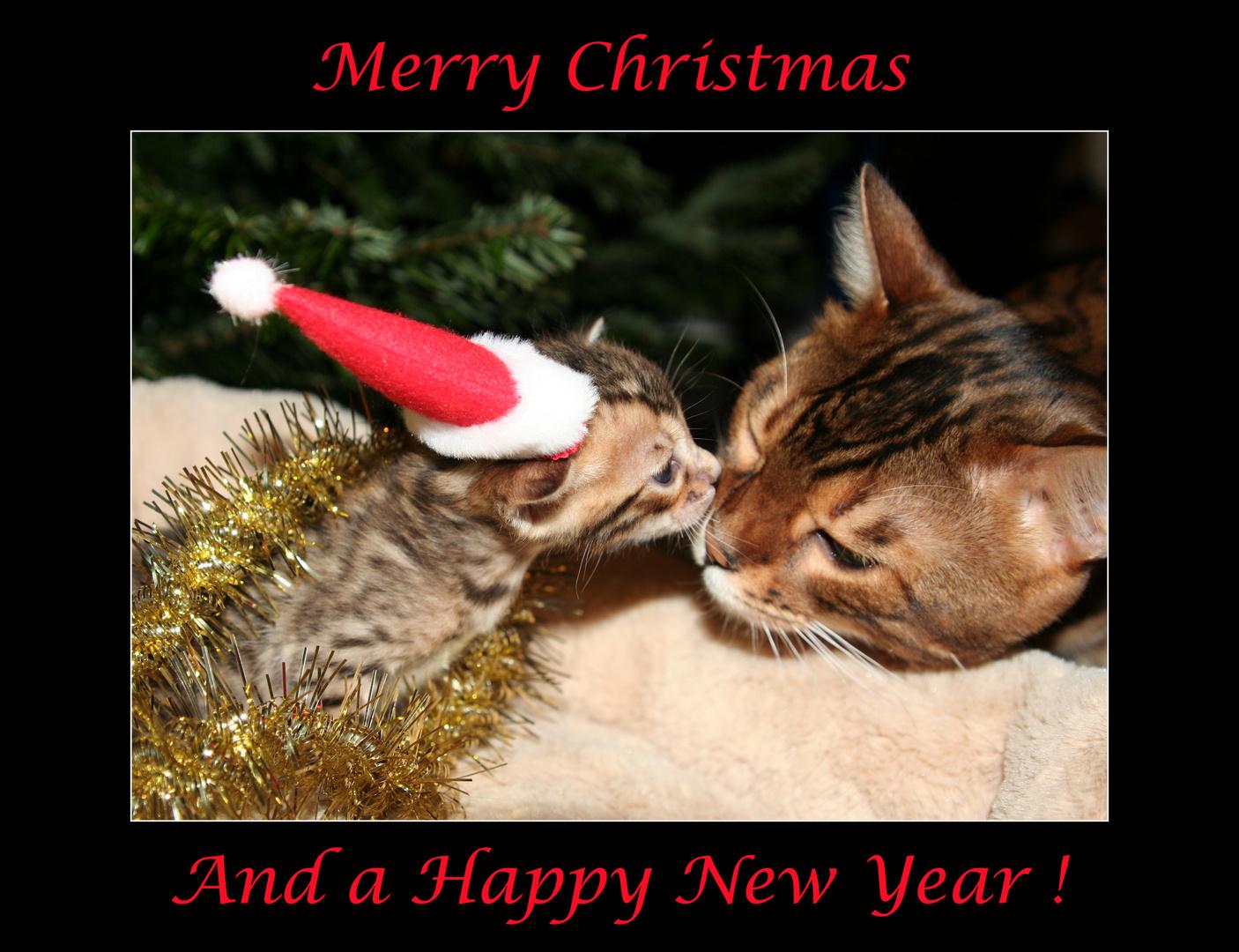 Frohe Weihnachten Und Einen Guten Rutsch Foto Bild Gratulation