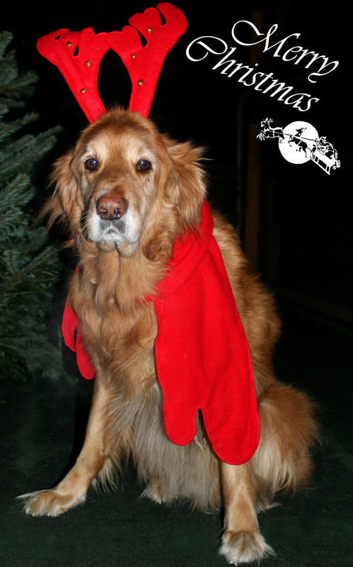 Frohe Weihnachten und nen guten Rutsch euch allen ;o)