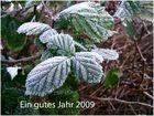 Frohes Neujahr 2009