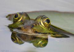 Frosch 08