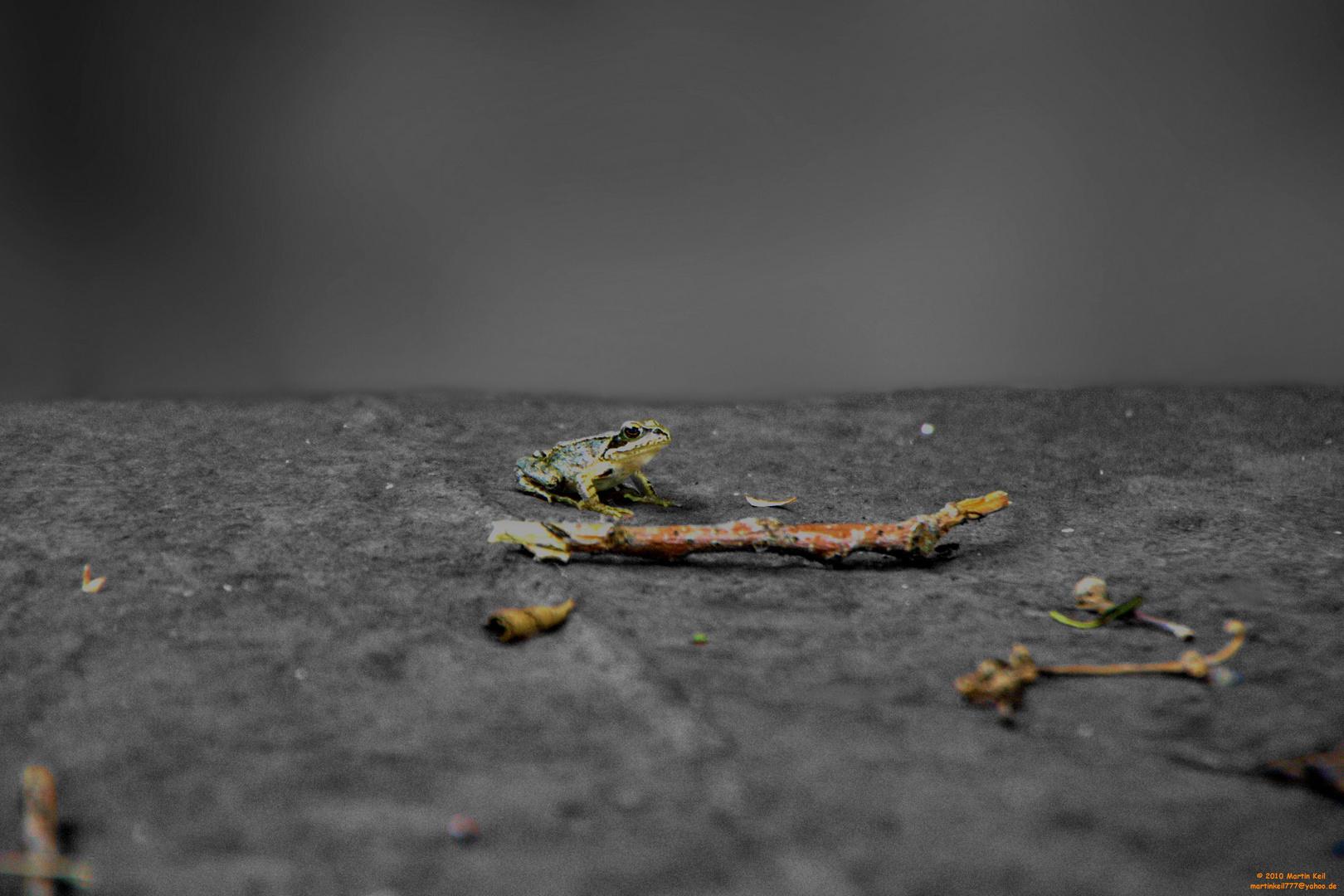 Frosch auf einem Verrostetem Boot