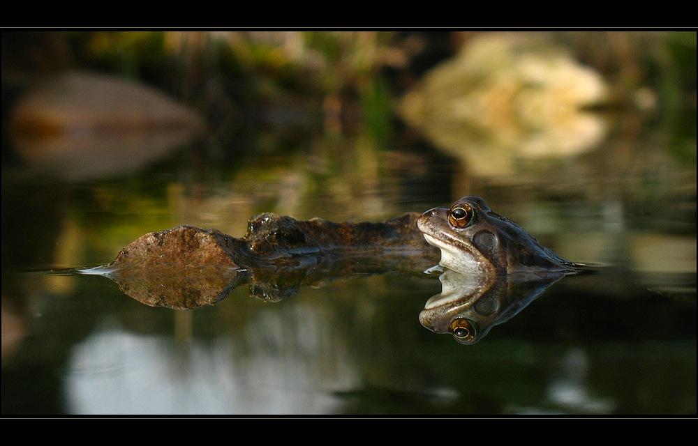 Frosch beim Sonnenbad