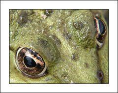 Frosch I