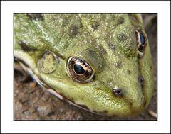 Frosch II