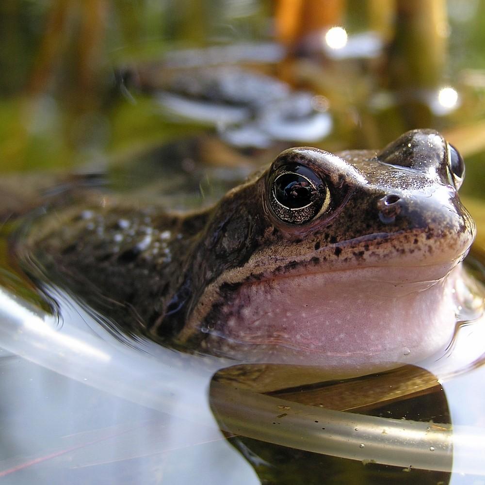Frosch im Detail