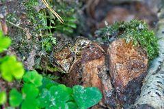 Frosch im Fels
