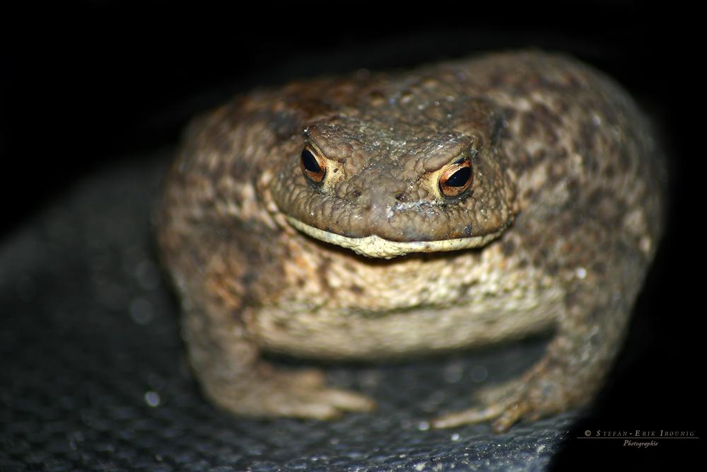 """"""" Frosch im Gartenschuh """""""