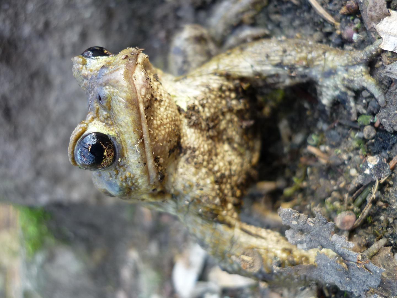 Frosch im Steinbachtal