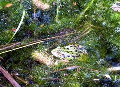 Frosch in der alten Panzerwaschstrasse
