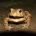 Frosch mit ohne Locken