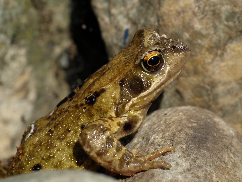 frosch oder kr te foto bild tiere wildlife amphibien reptilien bilder auf fotocommunity. Black Bedroom Furniture Sets. Home Design Ideas