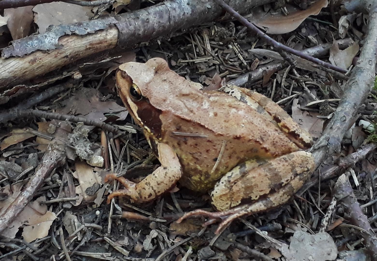 Frosch oder Kröte?