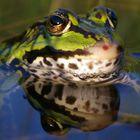 Frosch schaut nach dem rechten