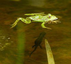 Frosch und Lurch