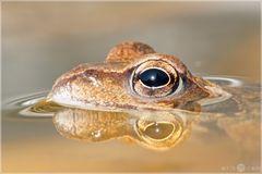 Frosch von gestern