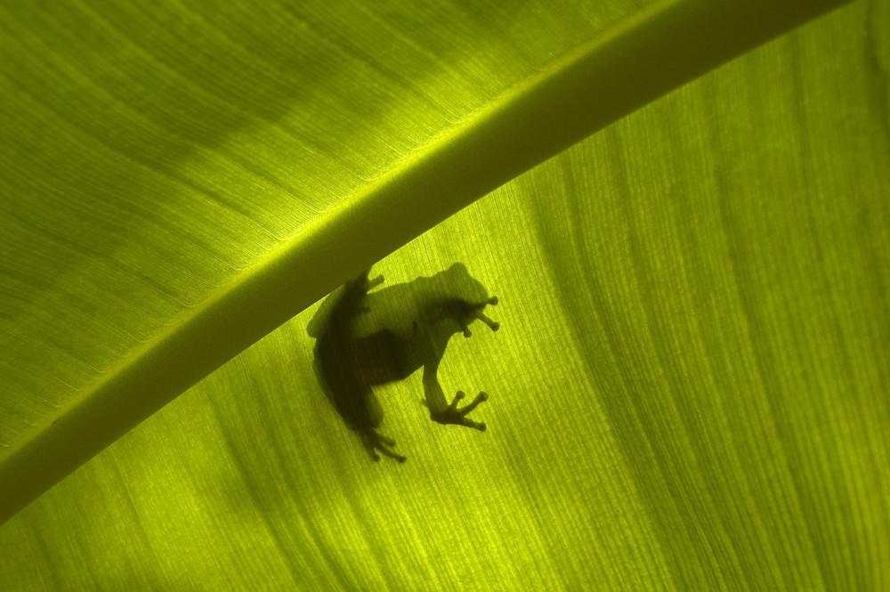 Frosch von oben