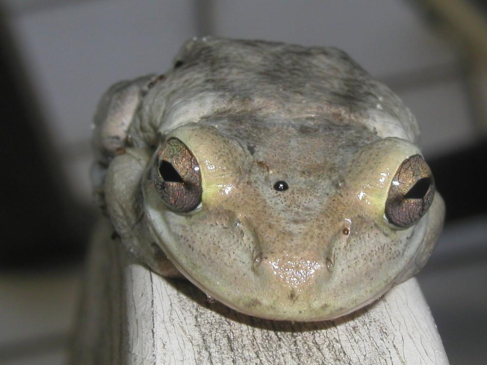 FroschAugen
