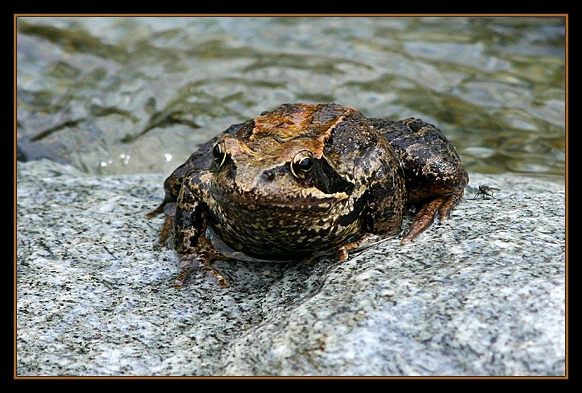 Froschkönig...