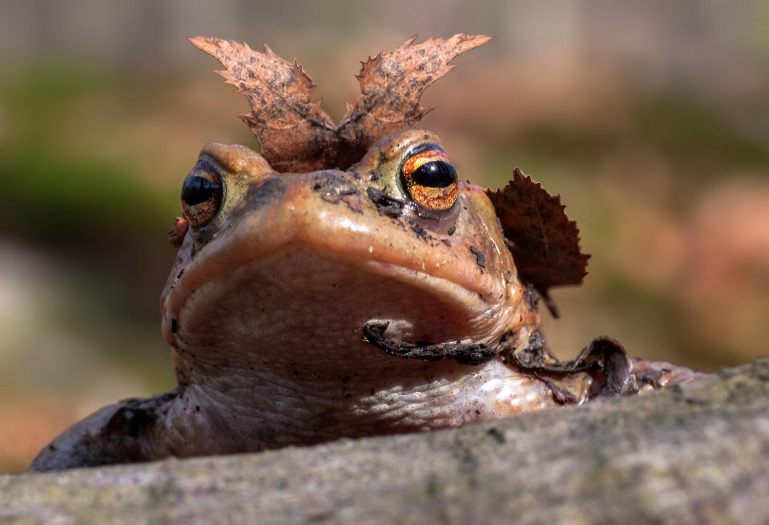 * Froschkönig *