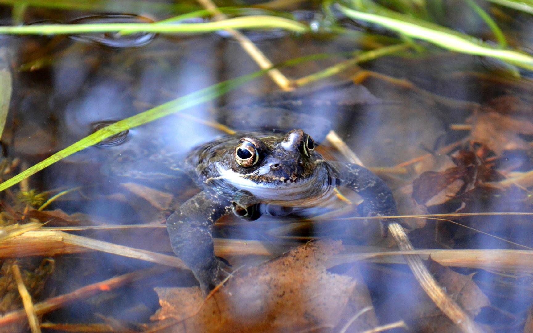 Froschkönig sucht Fau ;-)