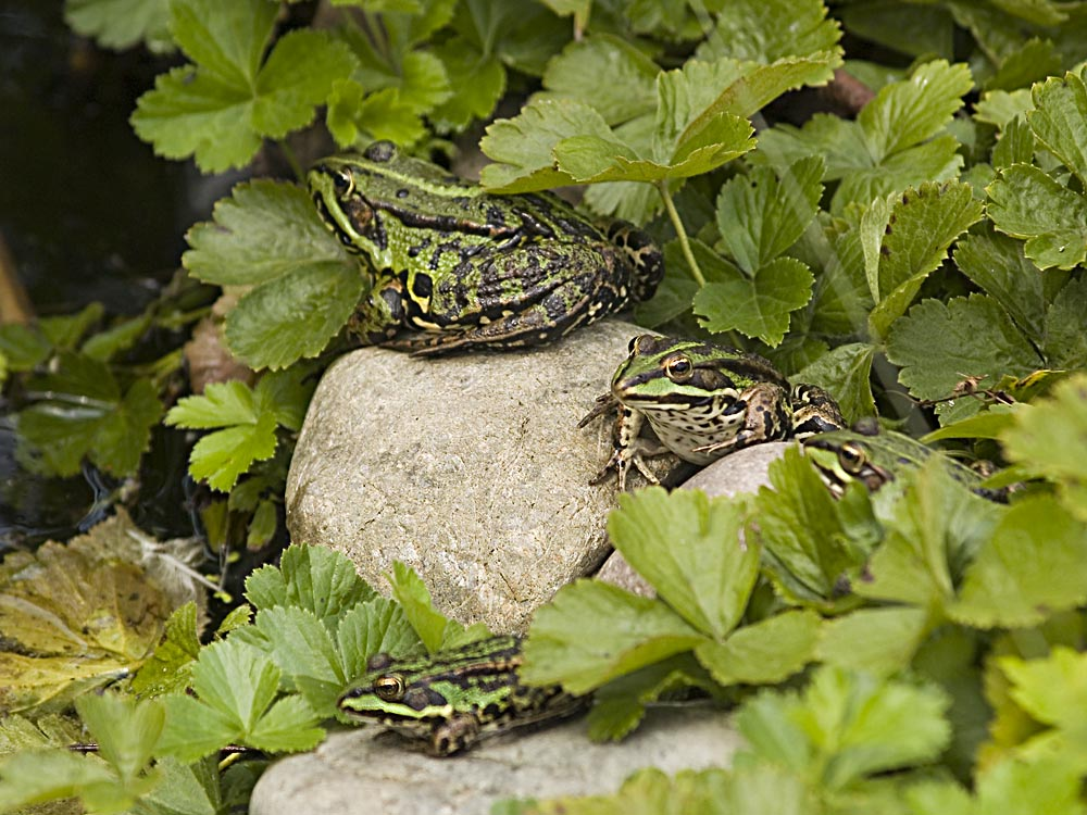 Froschparty