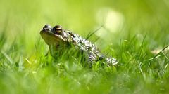 Froschperspektive (In der sächsischen Savanne)