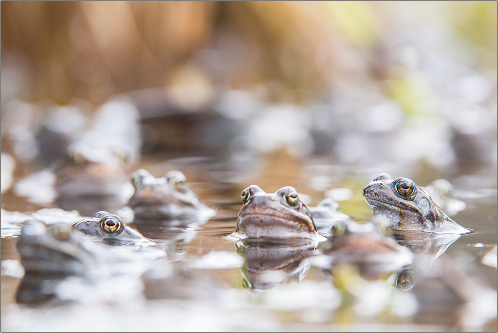 ~ Froschsuppe ~