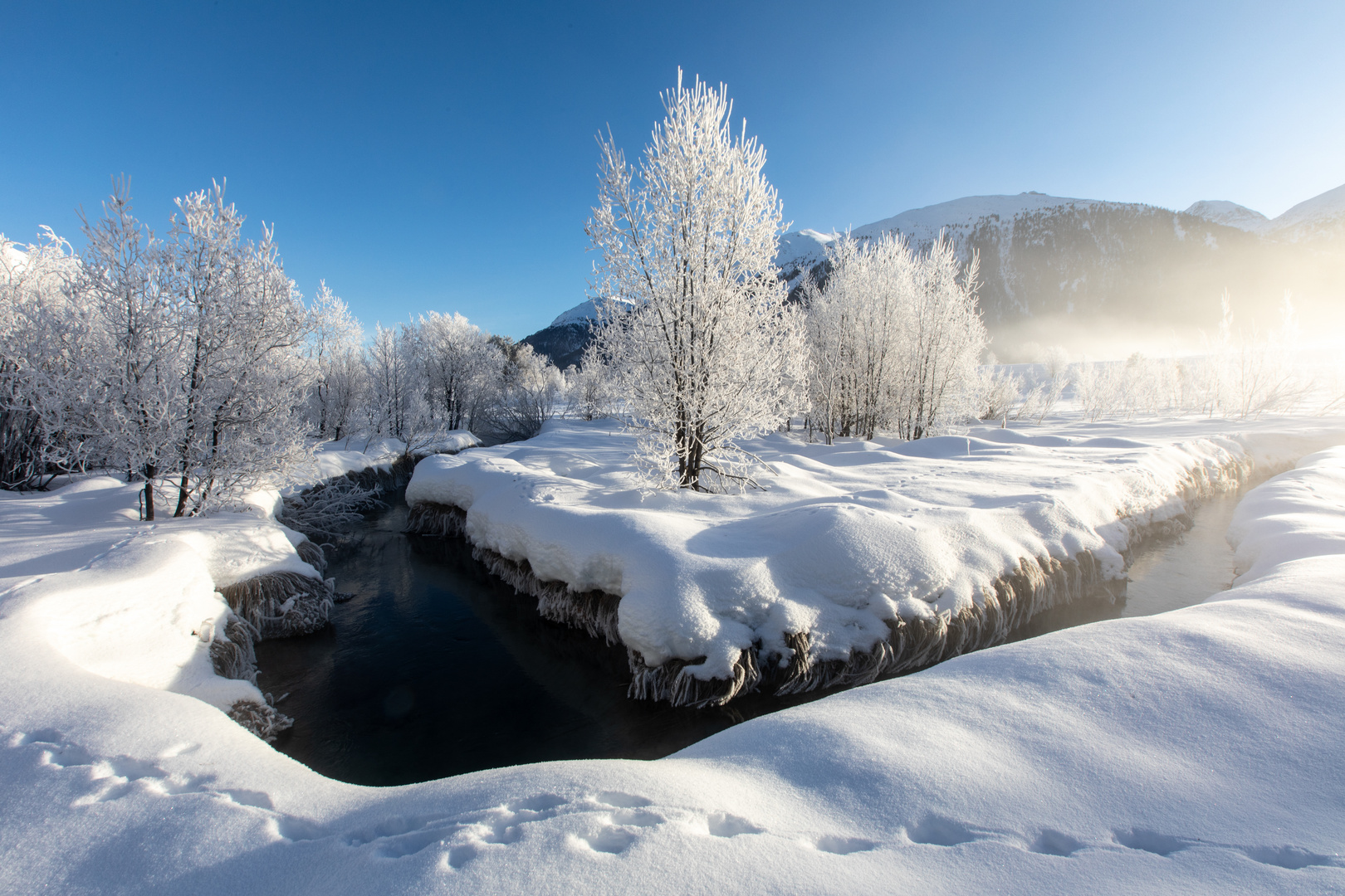 Frost (15)